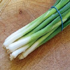Onion Tondo Musona - Bunching onion - Appx 500 seeds